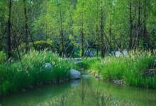 雨水花园里的植物们(乔木灌木篇)