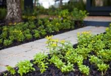 雨水花园里的植物们(地被花卉篇)